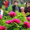 Flower Tourism in China