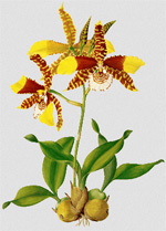 massachusetts_smith_orchid-exhibition